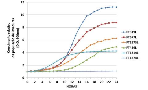 Crescimento relativo de leveduras industriais (Saccharomyces) utilizando a maltose. O crescimento foi avaliado por leituras da densidade óptica a 600nm em relação a população inicial de células